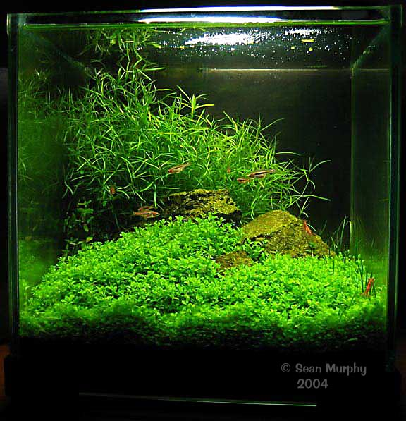 301 moved permanently - Gambar aquascape ...