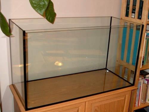 Mengenal Akuarium Ikan Zona Ik N
