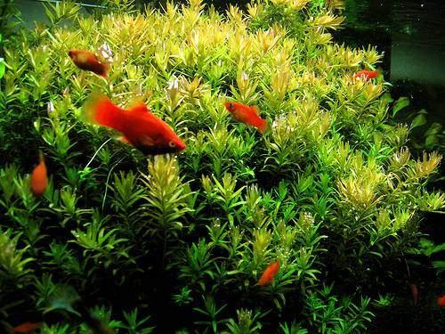 sumber photo : http://aquadaily.com/2008/11/16/tropical-fish-how-to ...